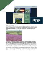 caracteristicas d los paisajes.docx