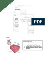 Resumen control nº3 anatomia.docx