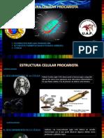 ESTRUCTURA CELULAR  PROCARIOTA .pdf