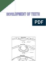 Odontogenesis 3