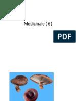 Tipuri principale de ciuperci