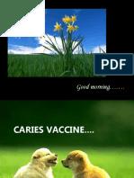 Caries Vaccine