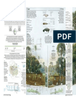 amazonia1.pdf