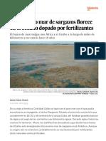 Un Inmenso Mar de Sargazos Florece en El Océano Dopado Por Fertilizantes - Ciencia - EL PAÍS