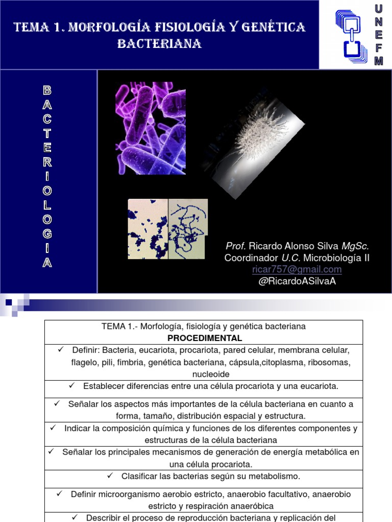 Bacterias Morfologia Dna Replication Bacteria