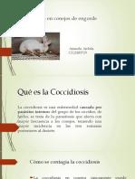 Coccidiosis en Conejos.