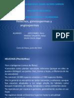Helechos Angiospermas Gimnospermas