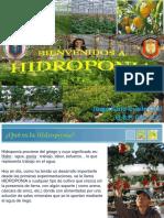 hidropona-111212011914-phpapp02.pdf