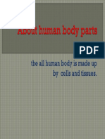 About Human Body Parts