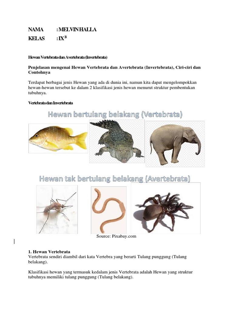 Jenis Hewan Vertebrata Dan Avertebrata Hewan Vertebrata Dan Avertebrata