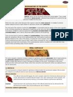 03 Microanatomy of the Kidneys (1)