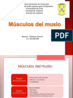 Musculos Del Muslo