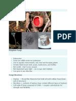 Fungi.docx