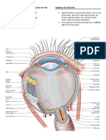 [B20M1] Anatomy and Physiology of the Eye [Group 5]