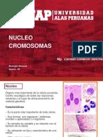 biologia nucleo celular