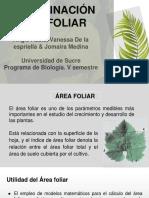 Determinacion Del Area Foliar (1)
