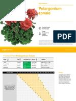 pelargonium_zonale_19 (1)