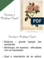 Introdução à Morfologia Vegetal - Aula 1 (1).pptx