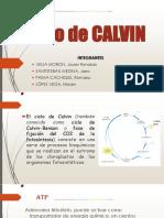 CICLO DE CALVIN PPT.pptx