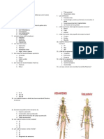Examen Sistema Esqueletico