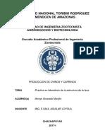 INFORME DE OVINOS PRACTICA.docx