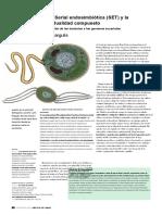 Teoría Endosimbiotica (TRADUCIDO)