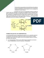 Anómeros.docx