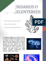 CNIDARIOS O CELENTEREOS.pptx