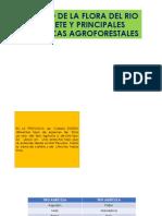 ESTUDIO  DE   LA  FLORA  DEL  RIO  CAÑETE Y.pptx.pptx