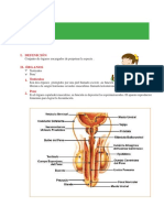 sistema reproductor masculino (5).docx