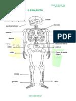 1.1-Ficha-Informativa-Os-ossos-1.pdf