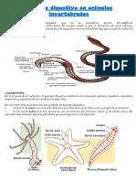 invertebrados.docx