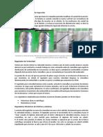 Regulación Del Caudal de Inyección y Regulador de Velocidad