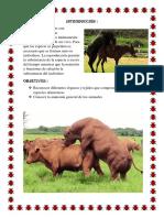anatomia de organos reproductores- REPRO.docx