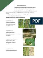 Sintomas y Signos de Enfermedades en Las Plantas