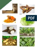 5 Hortalizas de Raíz Comestibles Solo Imagenes