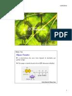Bioquímica. Fotossíntese e Quimiossíntese
