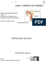 Presentacion anatomica de faringe