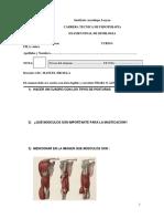 EXAMEN DE SEMIOLOGIA.docx