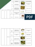 clasificación de los frutos.docx