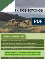 2. Zoologia Dos Bovinos - AGRVET