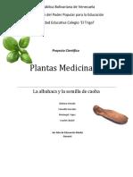 Plantas Medicinales Albahaca y Caoba 3er Año