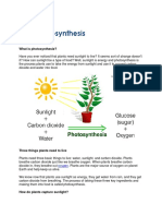 Photosynthesis 1