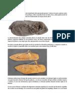 EVOLUCION ZAPATO.docx