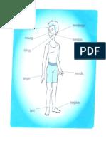 bagian-bgian tubuh