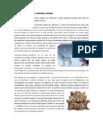 Información sobre los animales salvajes