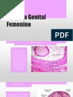 Sistema Genital Femenino1