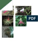 Plantas Aereas
