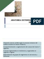Morfologia General Externa de Insectos