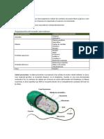 00. Microbiologia Notas Basicas